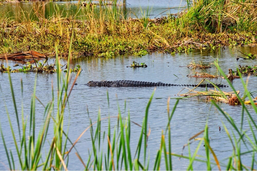 Loxahatchee Everglades Tours