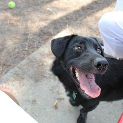 Riverside Dog Park - 41 Photos & 22 Reviews - Dog Parks