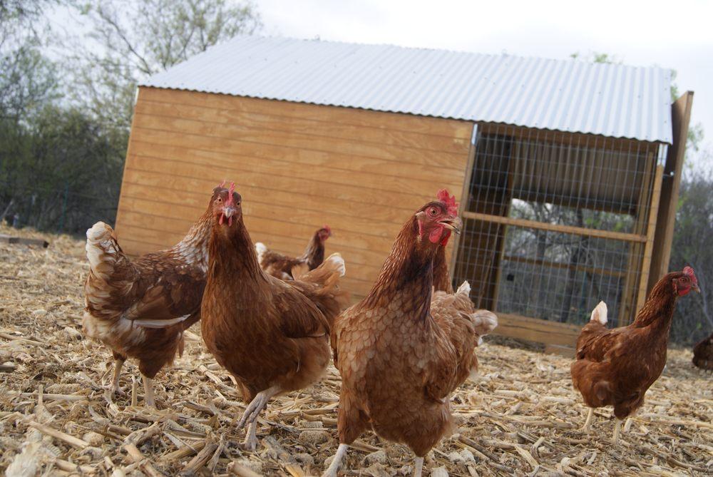 Grassfield Farm: 1208 17th St, Hondo, TX