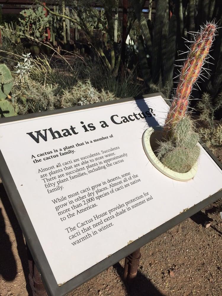 Photos For Desert Botanical Garden Yelp