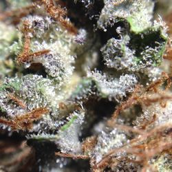 Higher Elevation Delivery Dispensary Photos Cannabis - Higher elevation