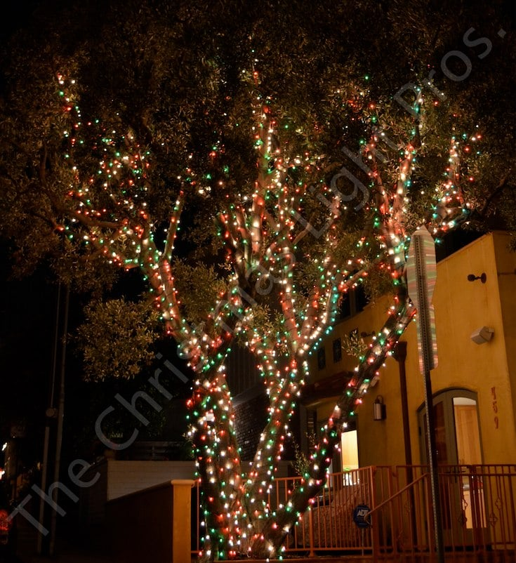 Tree Wrap With Red Green Frost And Clear White Alternating Bulbs