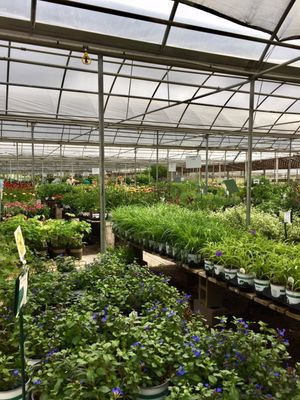 TLC Garden Centers 105 W Memorial Rd Oklahoma City, OK Greenhouses ...