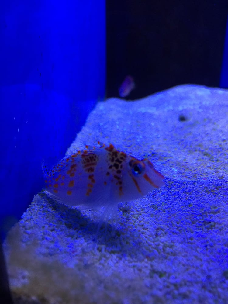 World Wide Corals: 11765 S Orange Blossom Trl, Orlando, FL