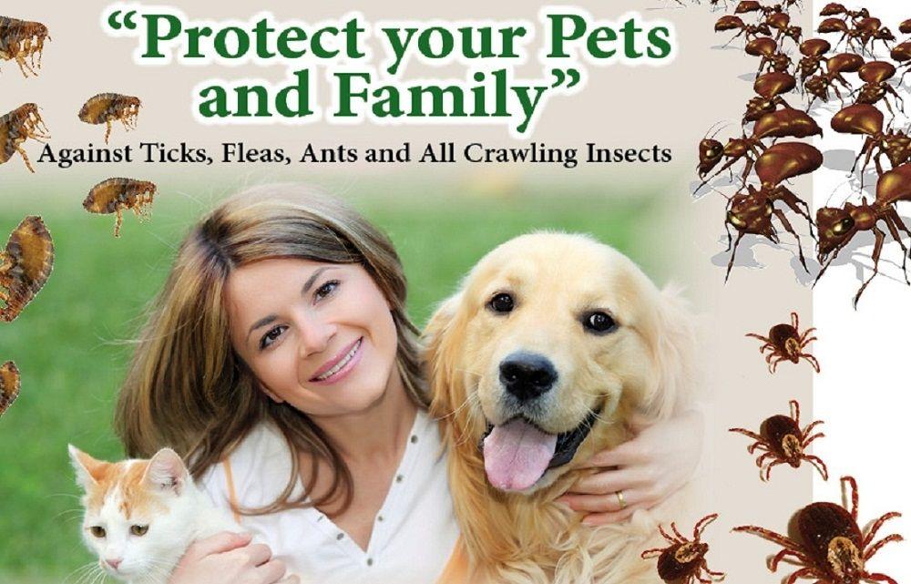 Planet Friendly Pest Control: Alexandria, VA