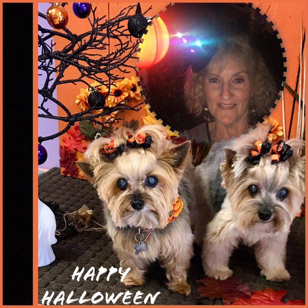 Just Dandy Pet Parlour: 978 Bichara Blvd, The Villages, FL