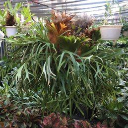 Vivero plantas de caparra jardineros 797 km 0 7 for Vivero plantas tropicales