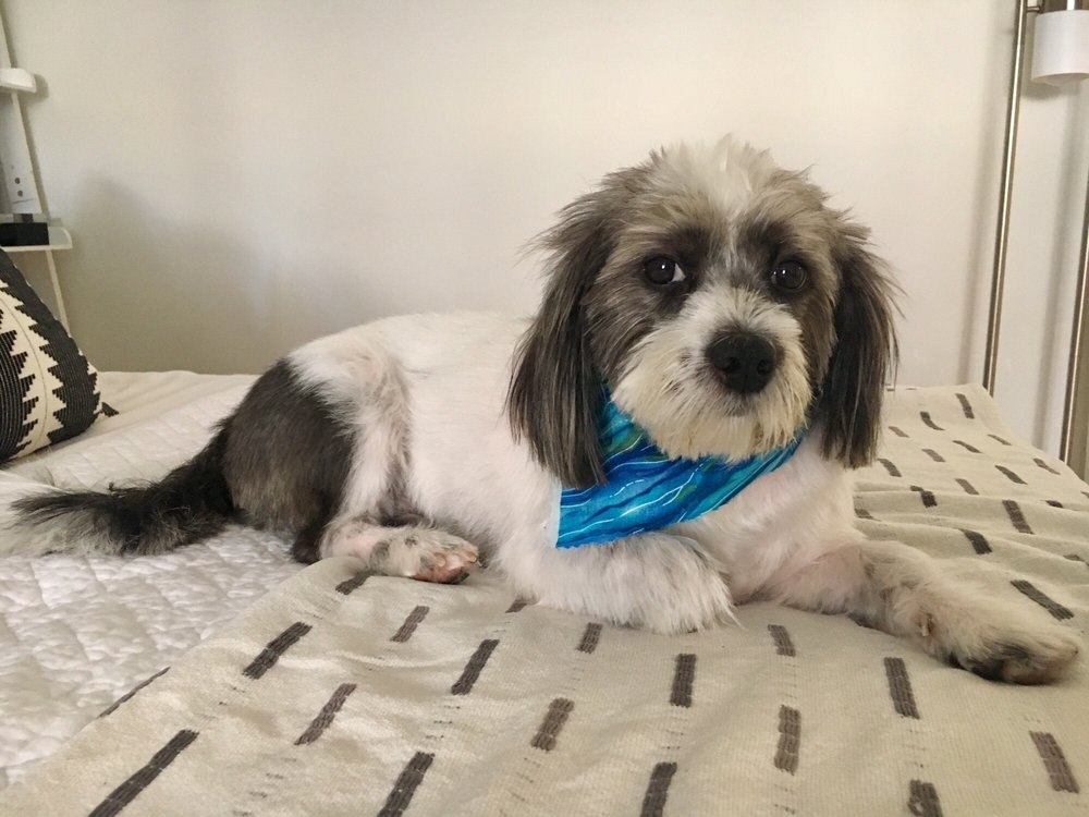 Shaggy magoo looking handsome in his blue bandana after his photo of unleashed spa self service dog wash new york ny united solutioingenieria Gallery