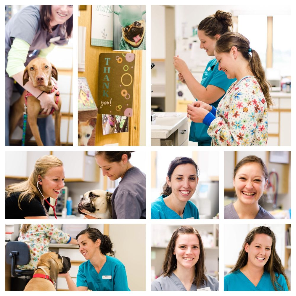Glacial Ridge Veterinary Clinic, P.A.: 16159 State Hwy 29, Glenwood, MN