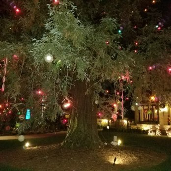 Photo of Christmas Tree Lane - San Marino, CA, United States. Lovely redwood - Christmas Tree Lane - CLOSED - 46 Photos & 13 Reviews - Christmas