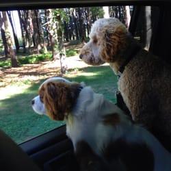 The Regal Beagle Dog Walking