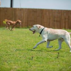 Dog Boarding Pflugerville