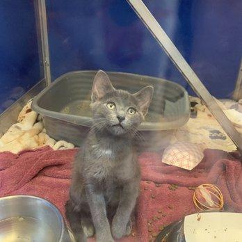 Prince William County Animal Shelter - 10 Photos - Animal Shelters