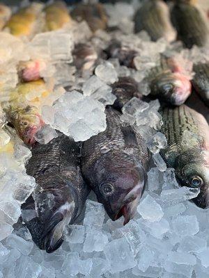 Vergote Poultry & Fish Market - Fish & Chips - 16523 Harper