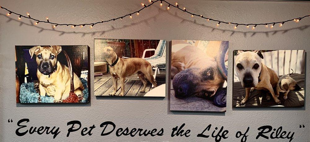 Riley's Natural Pet Supply: 7580 S Pierce St, Littleton, CO