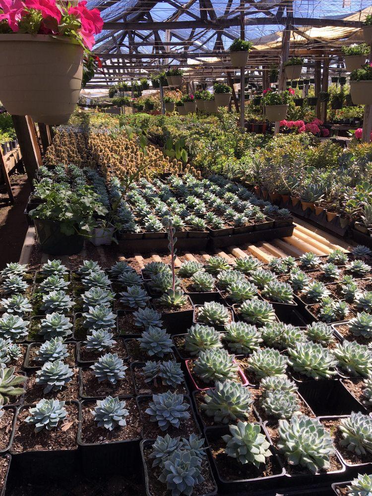 Ortega Nursery