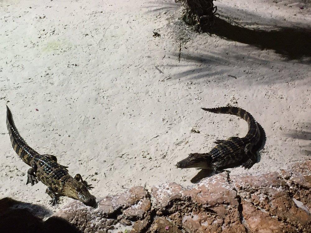Congo River Golf & Exploration: 531 W State Rd 436, Altamonte Springs, FL