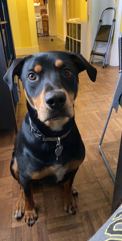 Cause & Effect Dog Training: Berkeley, CA