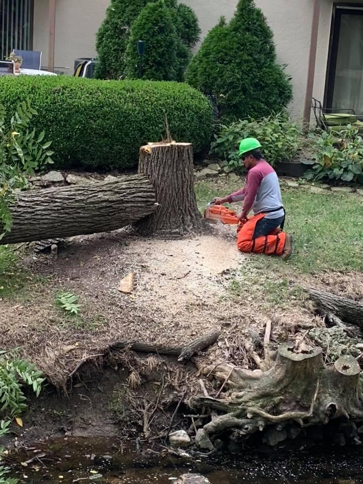 Artica Tree Service: Pickerington, OH