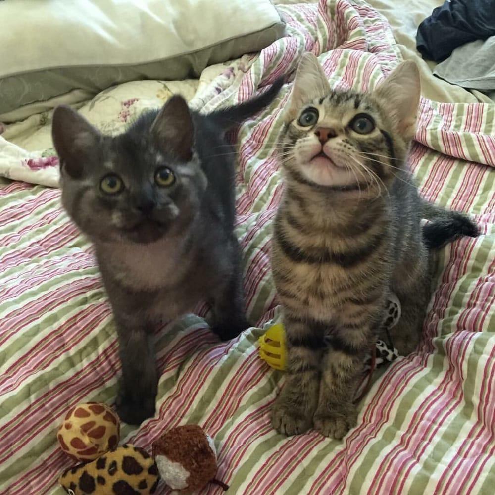 ASAP Animal Shelter Assistance Program - 14 Reviews - Animal