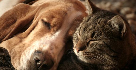 C'Lassie Cuts Mobile Pet Spa: 146 Mount Arlington Blvd, Landing, NJ