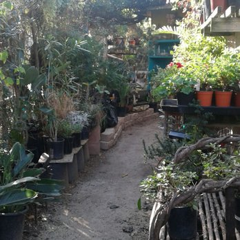 Photo Of Plant Play Nursery Carlsbad Ca United States