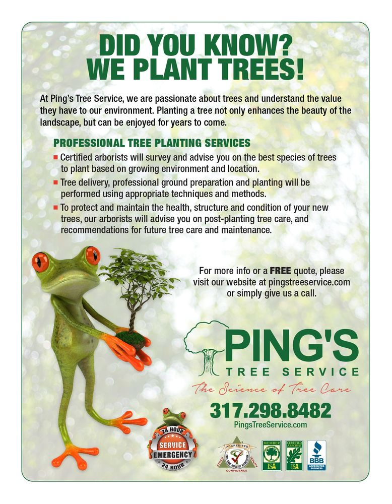 Ping's Tree Service - 2019 All You Need to Know BEFORE You