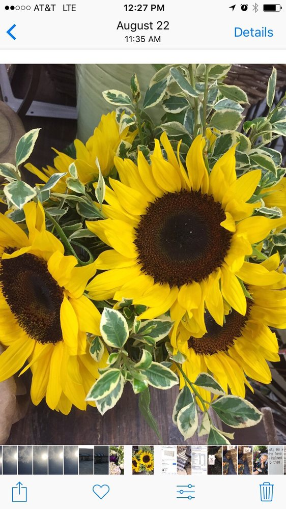 Town & Country Florist: 957 Hwy 425 N, Monticello, AR