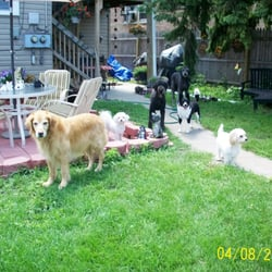 photo of dog house of beauty chicago il united states the boarding