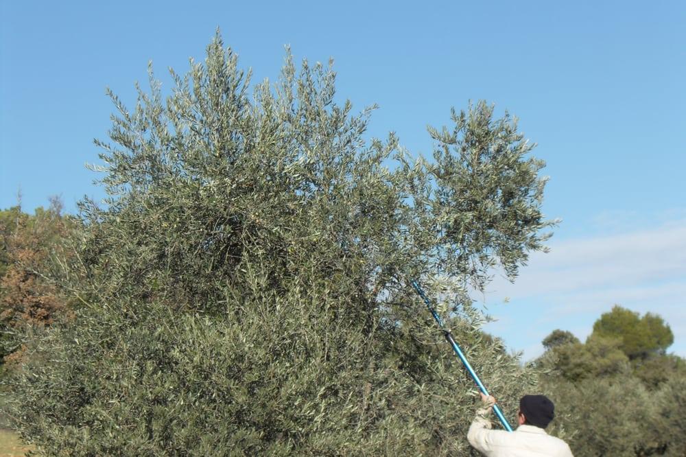 Vente d huile d olive march s lurs alpes de haute provence num ro de t - Vente privee numero telephone ...