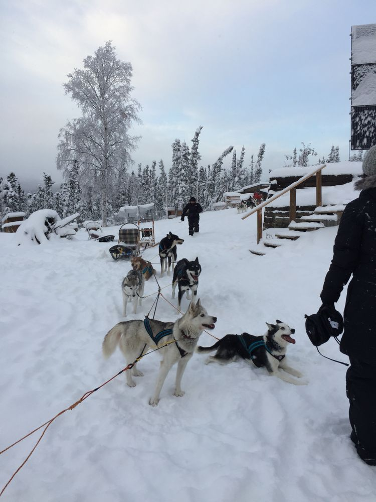 Sirius Sled Dogs: 6111 Abraham Rd, Fairbanks, AK