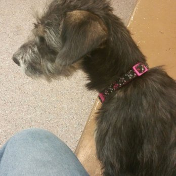 Golden state humane society 129 photos 361 reviews - Garden state veterinary services ...
