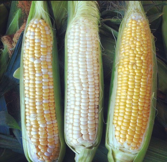Difference between white corn and yellow corn