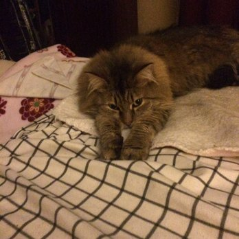 1 legged cat
