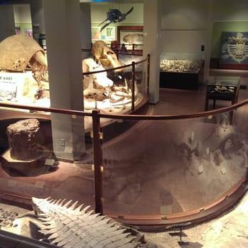 Texas Memorial Museum - (New) 74 Photos & 34 Reviews - Museums
