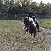 Gold Star Paso Fino Academy - 15 Photos - Horseback Riding - 5859 ...