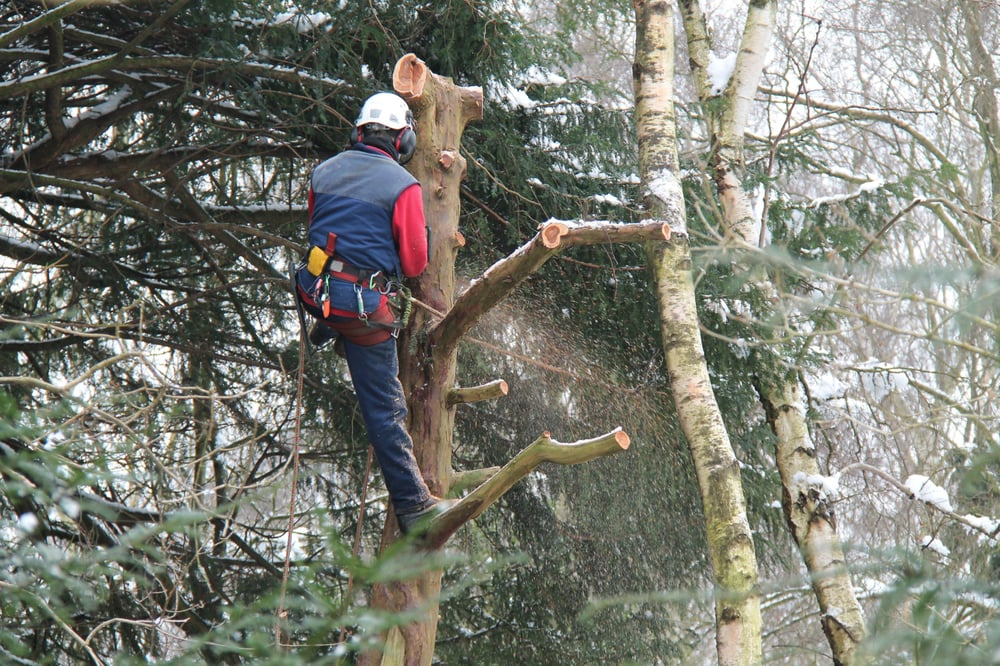 Mid State Tree Service: 6319 280th Ave, Royalton, MN