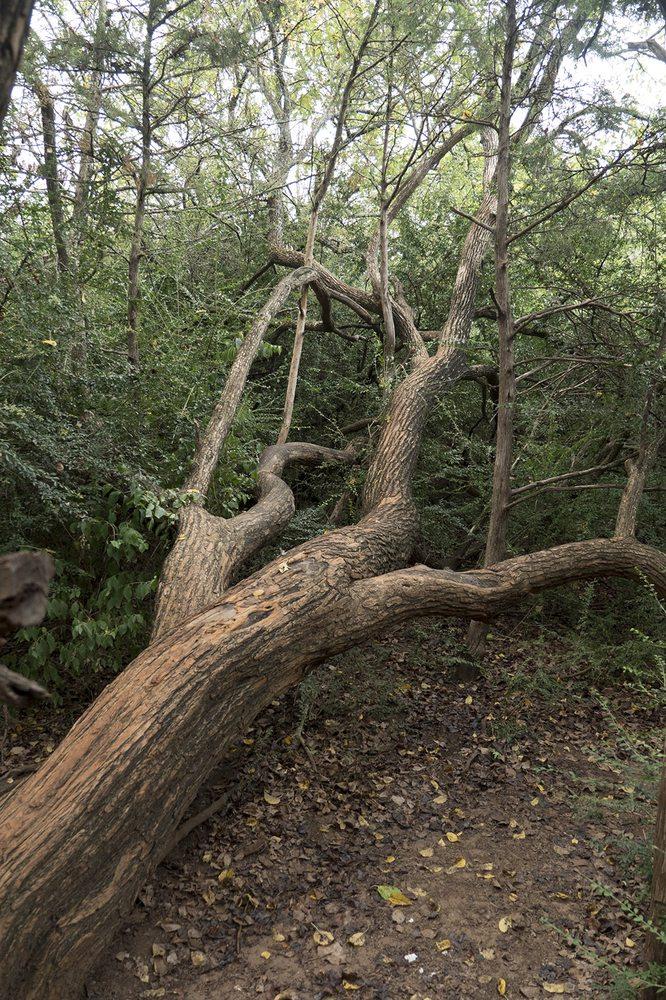 George Miksch Sutton Urban Wilderness Area