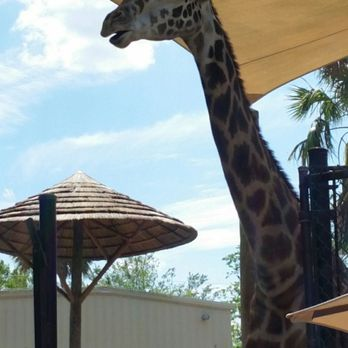 Charmant Photo Of Central Florida Zoo U0026 Botanical Gardens   Sanford, FL, United  States