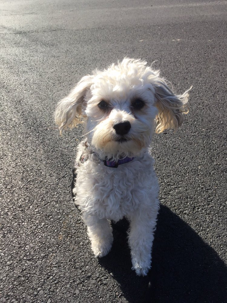 Top Dog Pet Sitting & Dog Walking: 7 Harvey Rd, Londonderry, NH