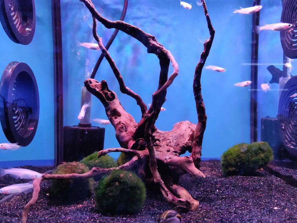 Aquarium Design Group: 3520 S Sam Houston Pkwy E, Houston, TX