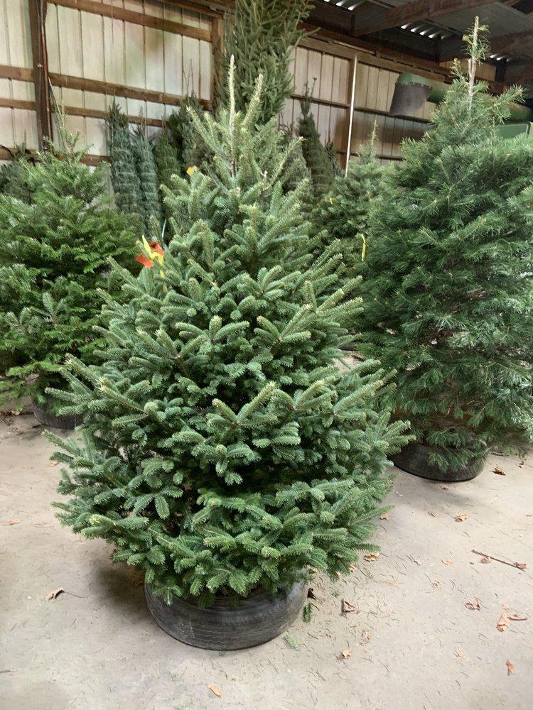 Luchsinger's Christmas Trees: 1155 Lucky Ln, LaFayette, NY