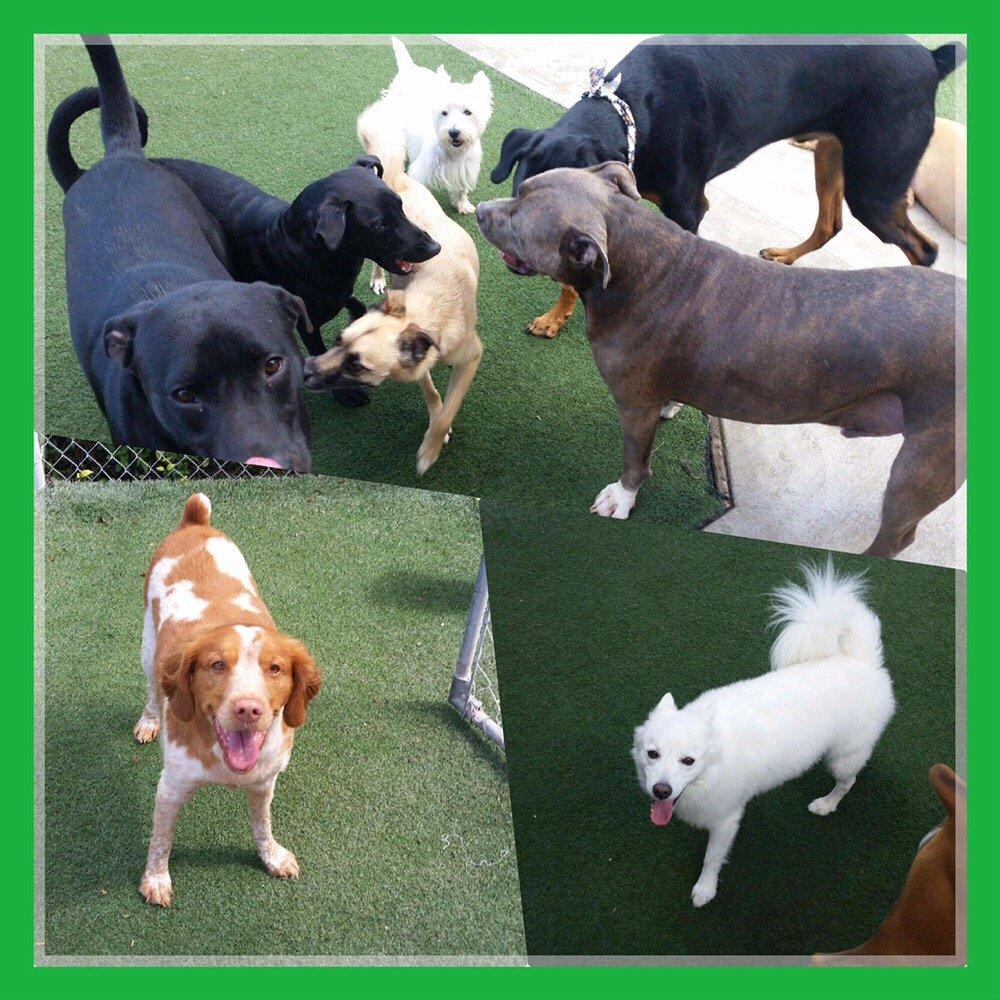 Preppy Pet Tampa West: 13513 Prestige Pl, Tampa, FL