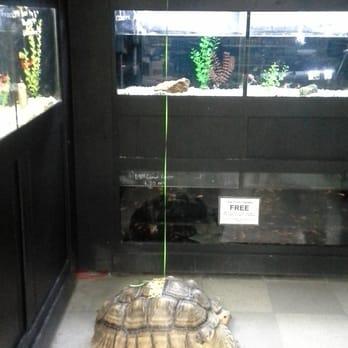 Petland 33 photos 28 reviews pet shops 2620 bethel for Fish store columbus ohio