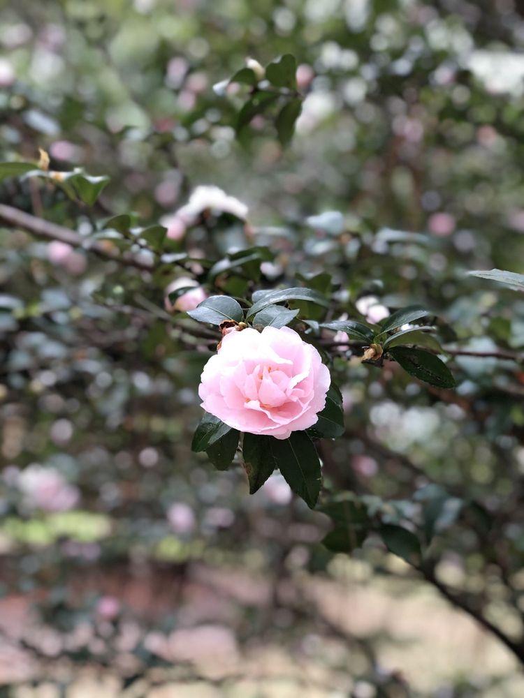 Swan Lake Iris Gardens: 822 W Liberty St, Sumter, SC