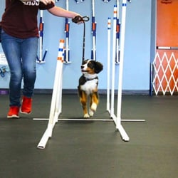 Zoom Room Dog Training - 89 Photos & 77 Reviews - Pet Training ...