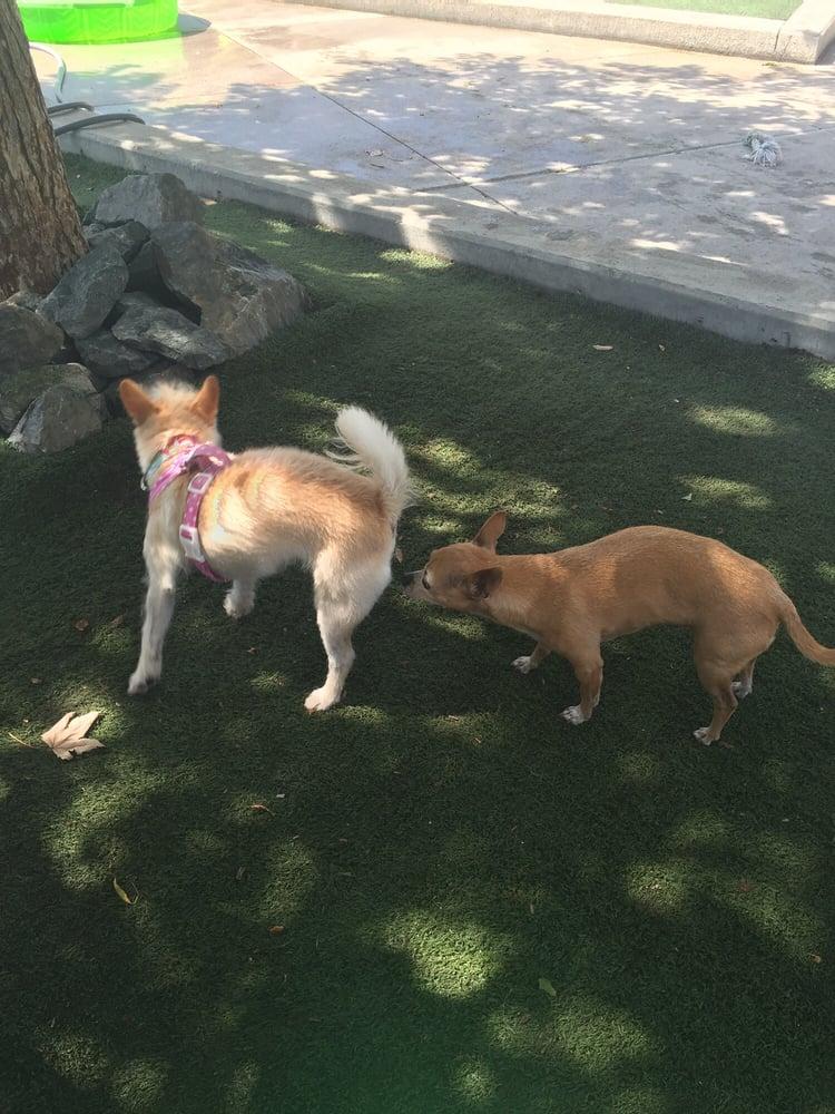Friends Of The Randolph Dog Park