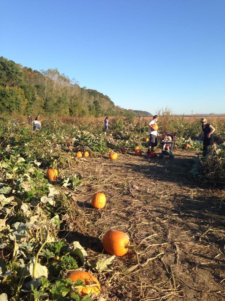 Hartsburg Pumpkin Festival: 68-72 S 2nd St, Hartsburg, MO