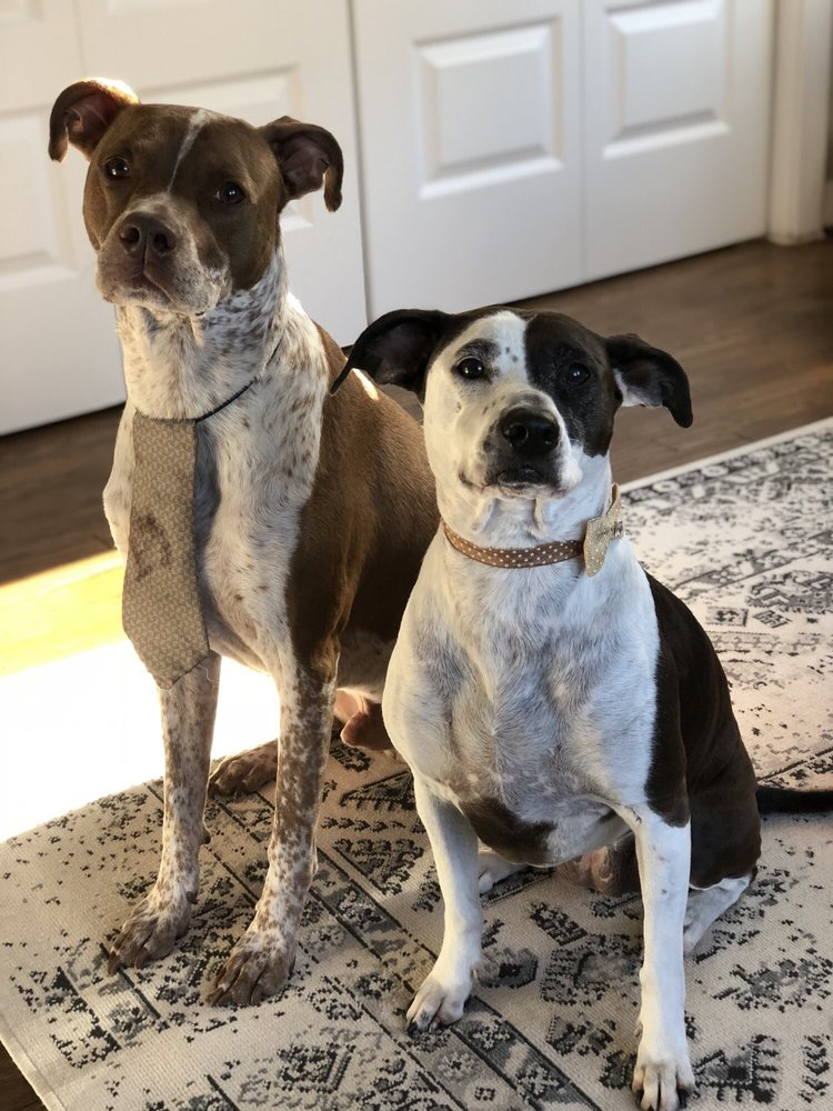 Untangled Mobile Pet Grooming: New Braunfels, TX