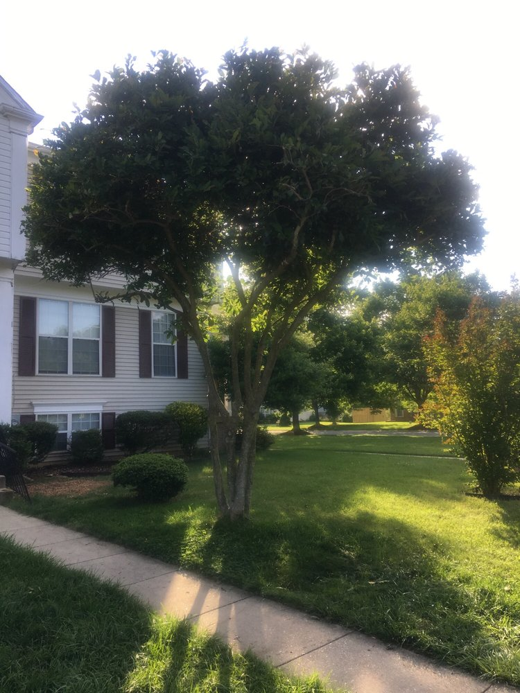 Booth Specialized Tree Service: Brandywine, MD
